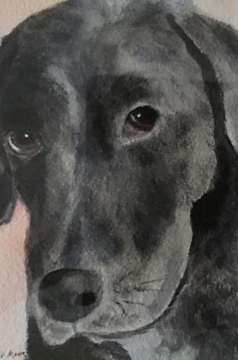 Mr Bates Pet Portrait
