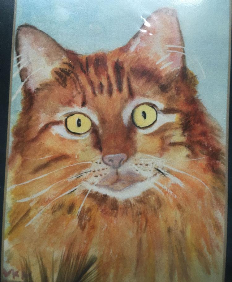 Virginia Moore Pet Portraits - Marcus the Cat