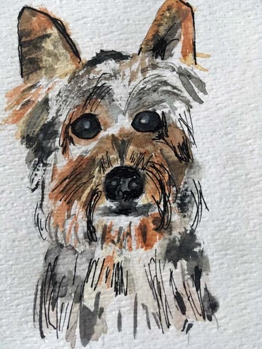 Virginia Moore Pet Portraits - Shadow